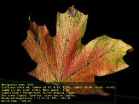 Leaf (with bump mapping)
