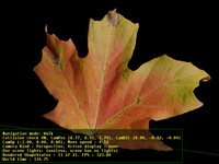 Leaf (without bump mapping)