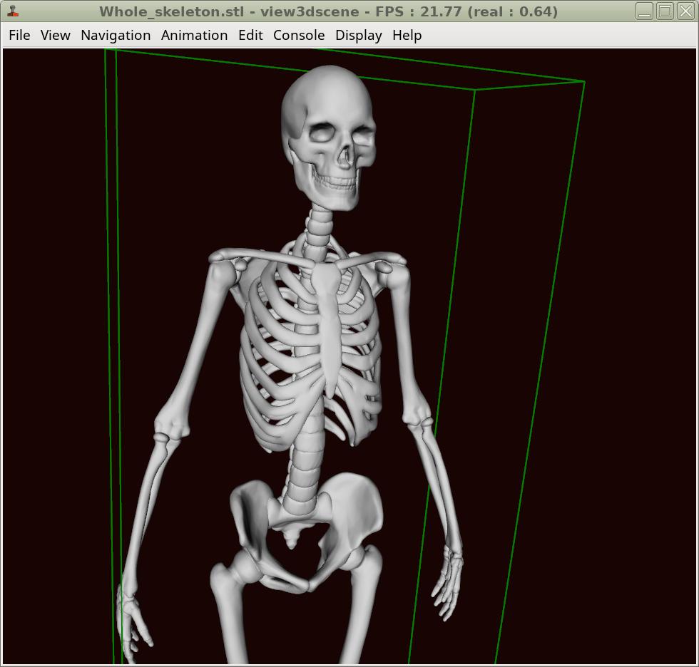 [صورة مرفقة: skeleton_stl.png]